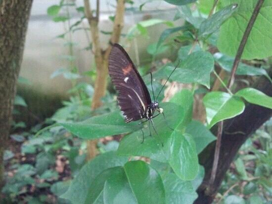 Dickson Holiday Park: the butterfly park near the holiday park
