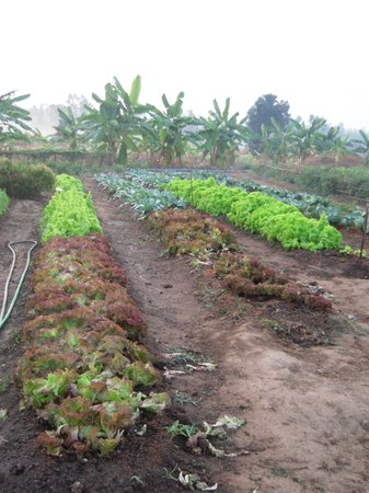 New Life Foundation : Part of the vegetable gardens