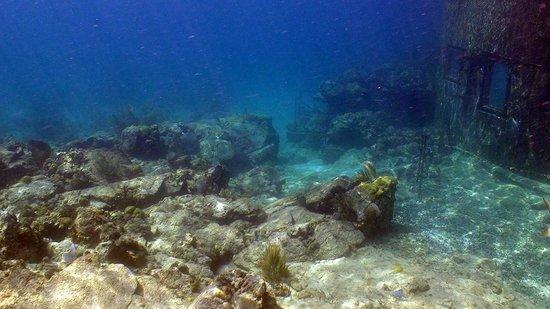 Ocean floor picture of coral world ocean park smith bay for Ocean s floor