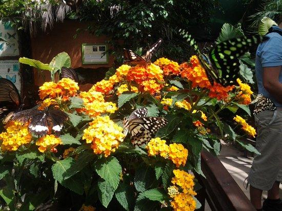 Farfalle e fiori, Casa delle Farfalle di Montegrotto Terme