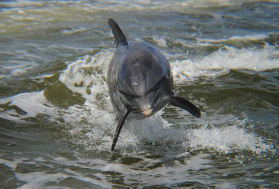 Everglades Area Tours: Our bottleneck dolphin friend