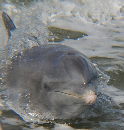 Everglades Area Tours: dolphins following our boat