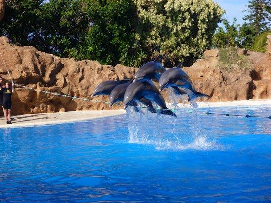 Dolphins picture of loro parque puerto de la cruz tripadvisor - Loro parque puerto de la cruz ...