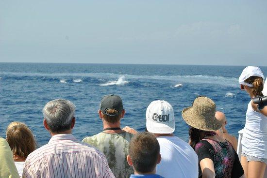 Santuario dei Cetacei: spettacolo in mezzo al mare