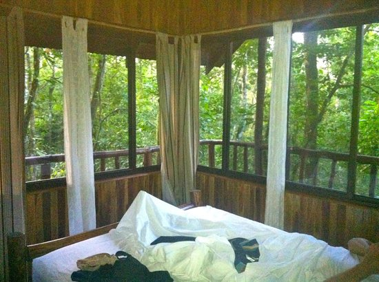 Tree Houses Hotel Costa Rica:                   Amazing view to wake up to every morning!