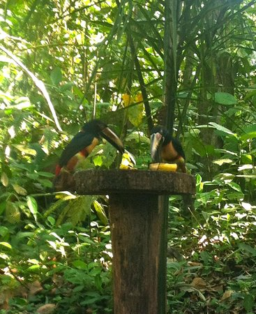 Tree Houses Hotel Costa Rica:                   So many colorful birds!!