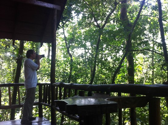 Tree Houses Hotel Costa Rica:                   Always so much to see