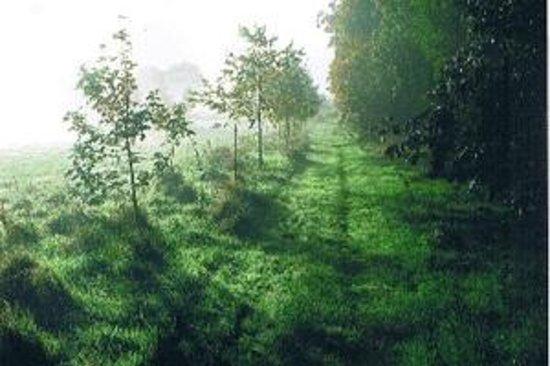 Nature walks on Belan Lodge Farm Moone Kildare