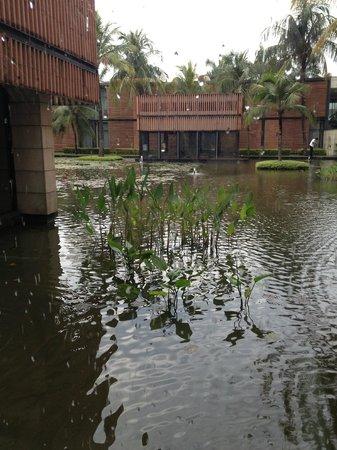 آي تي سي سونار كولكاتا: courtyard