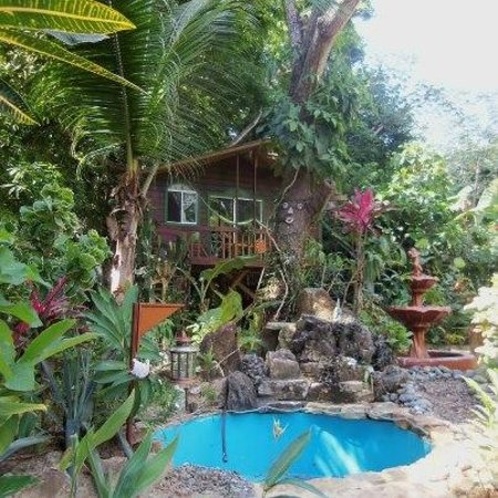 Cinco Continentes Rooms & Apartments:                   The Tree House at Cinco Continenties