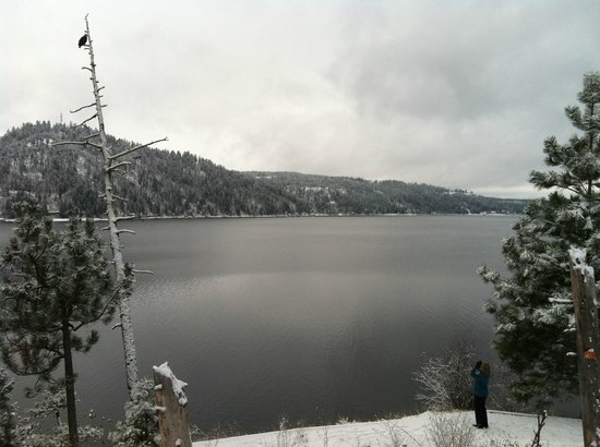 The Coeur d'Alene Resort:                   Bald Eagles Abound