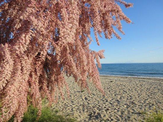Ikos Oceania: Beach line next to hotel