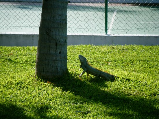 Royal Decameron Complex:                   One of their pets