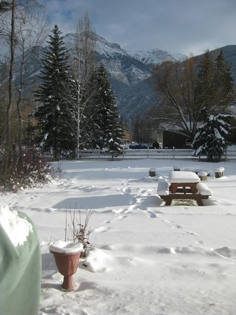 Kicking Horse Kabins:                   The back garden