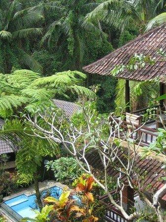Gustis Garden Bungalows:                                     The pool