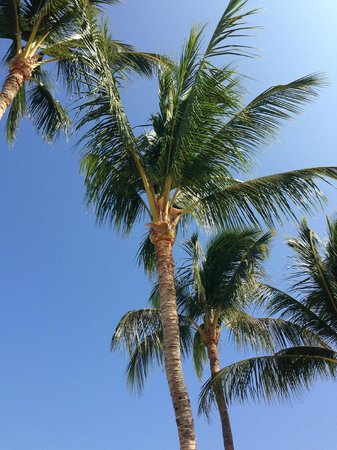 Fairmont Orchid, Hawaii: looking up from my beach chair