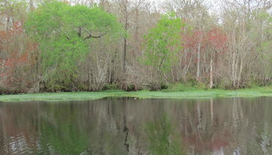 Blue Heron River Tours : Some color