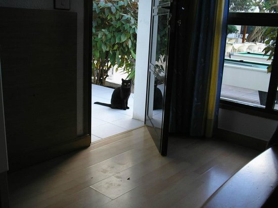 Apartamentos Aguamar:                   This is a cat that i'm told often vists the Hotel, so of course i fed it.