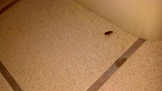 Holiday Inn Corpus Christi Airport Hotel & Conference Center :                   bathroom bug