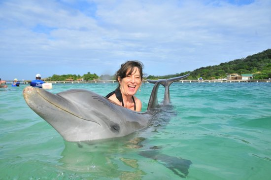 Roatán, Honduras: Happy encounter with Pigeon, the dolphin, in Roatan