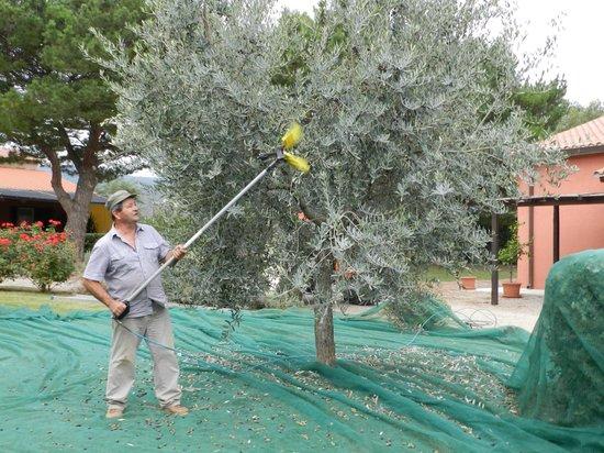 Agriturismo Fusini: giardino
