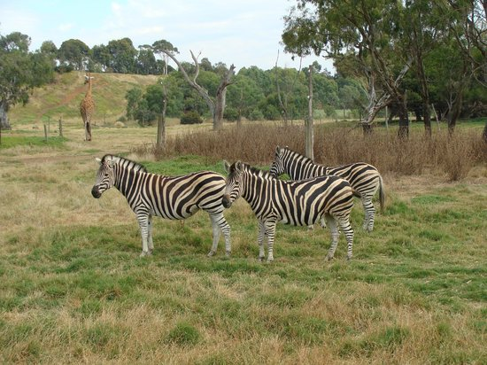 Werribee Open Range Zoo: Open Range Zoo
