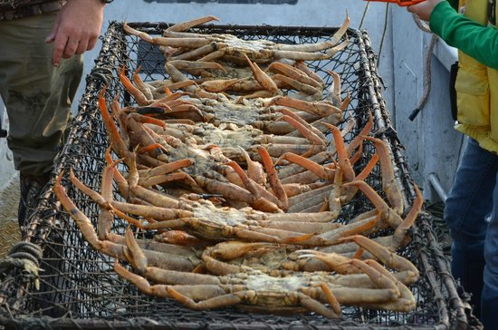 Spirit of Alaska Wilderness Adventures Lodge : With a fishing licence you can put out a crab pot.
