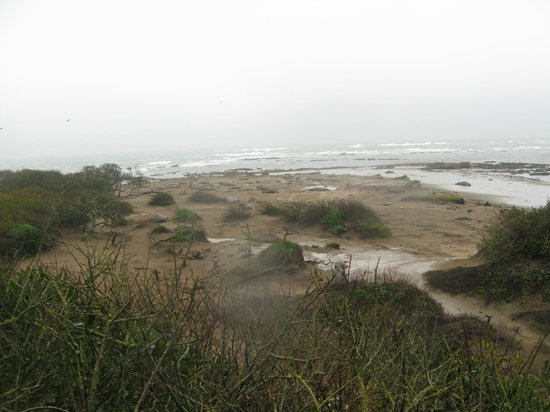 Ano Nuevo Elephant Seal Tours: hundreds of elephant seals