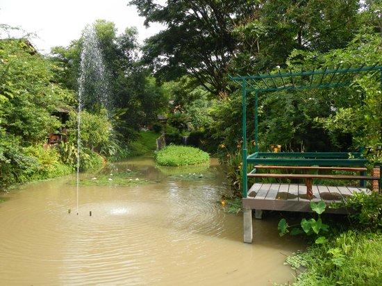 Belle Villa Resort Chiang Mai:                   pond