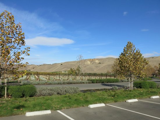 Hawthorn Suites by Wyndham Livermore: The vineyards of the Wente Winery, Livermore