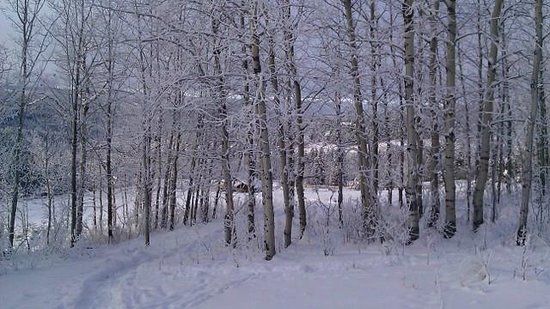 Juniper Trails Bed and Breakfast:                   Snowshoeing on the property