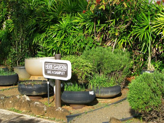 Pono Kai Resort: Herb Garden for guest use