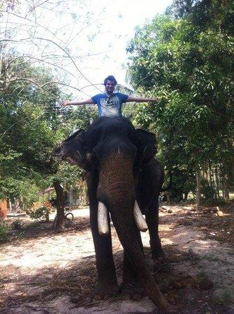 Marari Dreamz: elephant ride