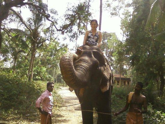 Marari Dreamz: elephant ride