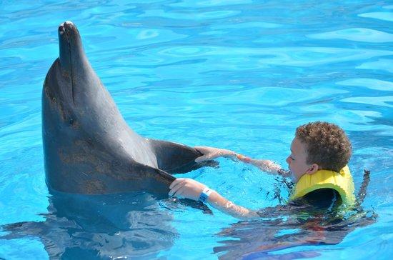 Dolphinaris Cancún: handshake