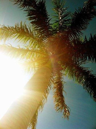 Gulf Tides Inn: my favorite palm tree- day