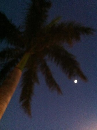 Gulf Tides Inn: my favorite palm tree- night
