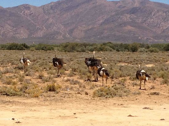 Inverdoorn Game Reserve Safaris 사진