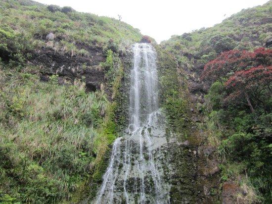 Waitakere Ranges:                   Falls
