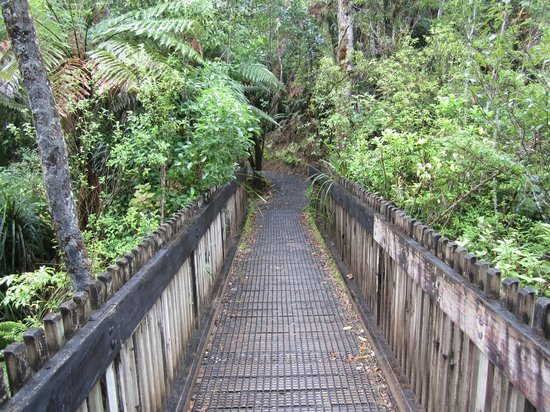Waitakere Ranges:                   Rain Forest Walk