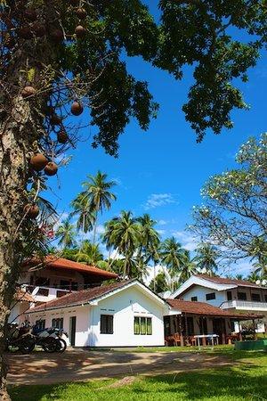 Nuga Eden Villa Tangalle: Cannonball Tree