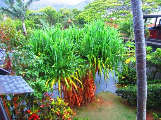 Paradise Bay Resort Hawaii:                   gardens