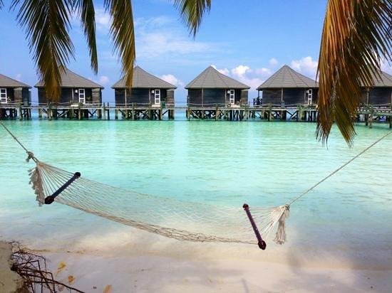 Tripadvisor Kuredu Island Resort Reviews