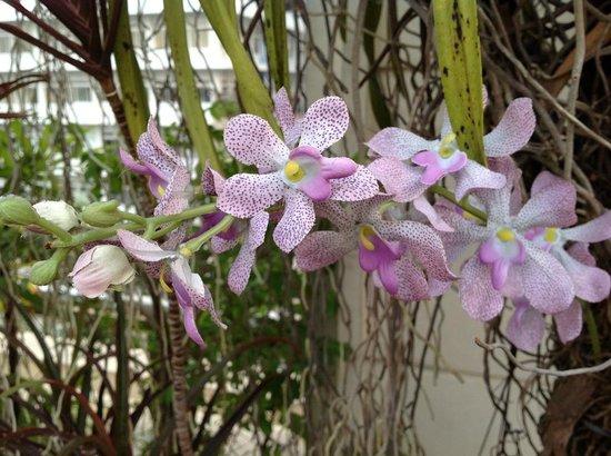 Silk Suite Hotel: beautiful flowers in roof garden