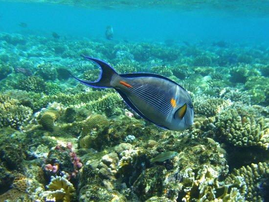 Grand Rotana Resort & Spa :                   On the Hotels own Reef
