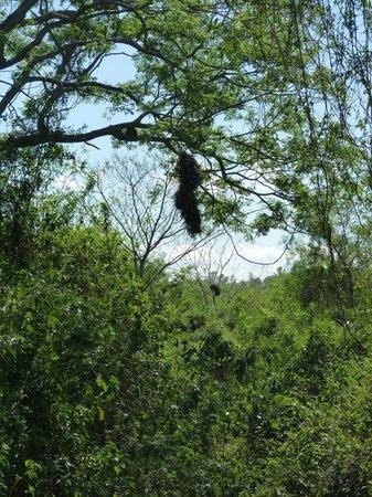 Parque Nu Guasu: Naturaleza agreste