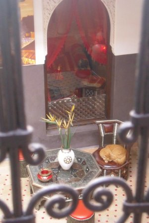 Riad La Porte Rouge: IL TENERO GATTONE