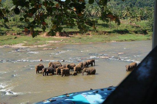 Hotel Elephant Bay:                   Вид из ресторана