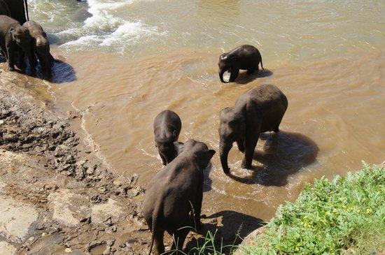 Hotel Elephant Bay:                   Слоники в ручье