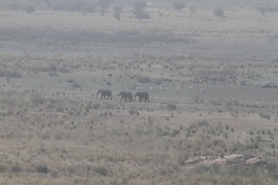 """Campement de Thialy: From the Relaxing and View point """"Elephants"""""""